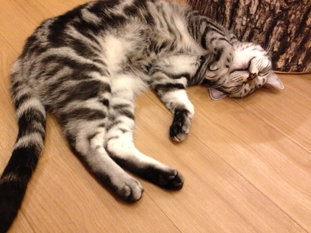 Cat_Cafe.jpg