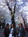 渋谷の桜とジェイパーズ青年合唱団